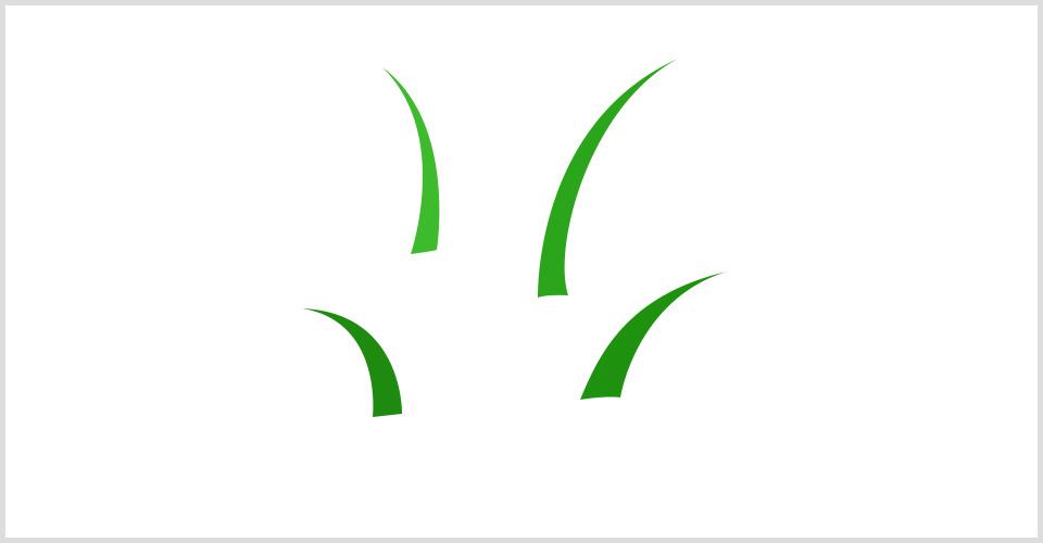 3.依次画出不同部分的叶子形状.jpg