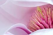 PS给暗淡的花朵调出明亮的色调