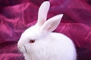 PS抽出滤镜抠出毛茸茸的小白兔