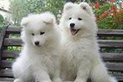 PS抽出滤镜抠出白色的小狗