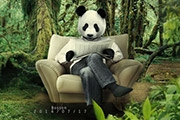 PS合成密林中看报的熊猫人